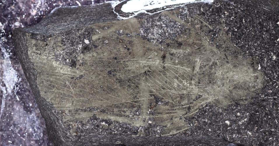 Exemplar fossilizado da barata Anthracoblattina mendesi