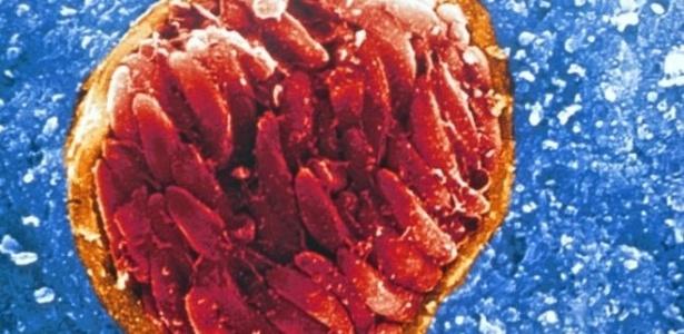 Adultos com IED mostraram propensão duas vezes maior de infecção em estudo - Universidade de Chicago