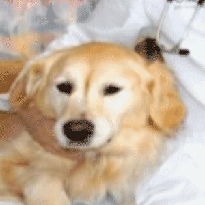 13.jan.2017 - Bob (centro) e sua cadelinha Kelsey em hospital nos EUA - WYFF