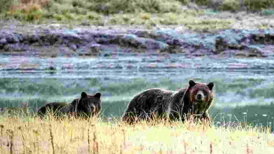 Os ataques de ursos-pardos não provocados são geralmente muito raros - AFP