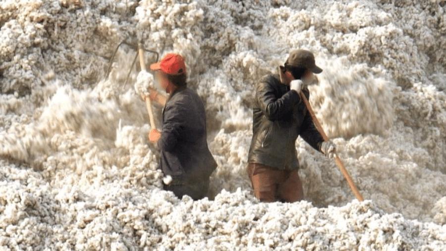 Mais de 1 milhão de pessoas trabalham na colheita de algodão em Xinjiang sob condições questionáveis - BBC