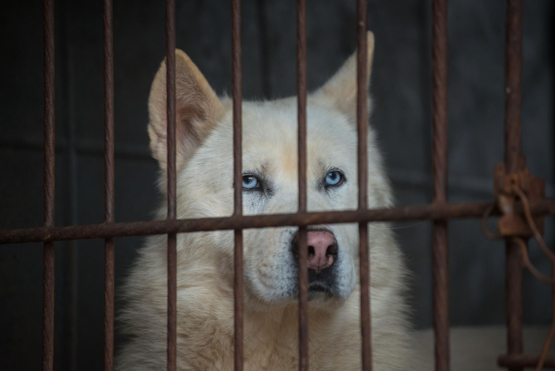 Cachorro, gato, cutia? Saiba que animais podem ser comidos no Brasil -  26/10/2016 - UOL Notícias