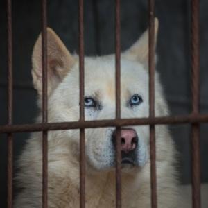 A Humane Society International estima que 10 milhões de cachorros sejam mortos todos os anos para consumo - Ed Jones/AFP