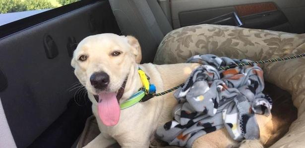 Cachorra foi resgatada após sofrer acidente e se perder da dona nos EUA