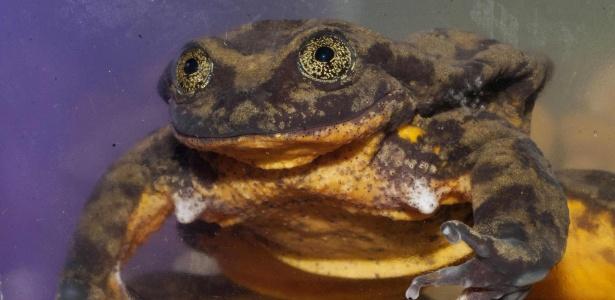 Romeo vive no Museu de História Natural de Cochabamba e tem poucos anos de vida para conseguir salvar sua espécie