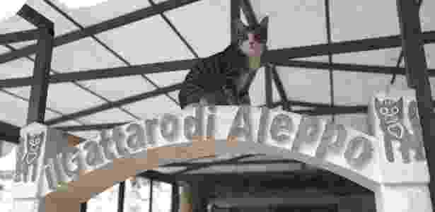 Gato sentado na entrada do Santuário dos Gatos Ernesto em Kfar Naha, Síria - Omar Haj Kadour/AFP