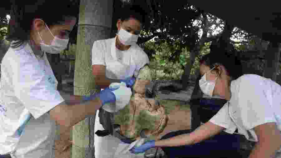 Tartaruga recebe cuidados no Centro de Reabilitação de Mamíferos Marinhos do Aquasis (CRMM) na cidade de Caucaia, no Ceará - AFP