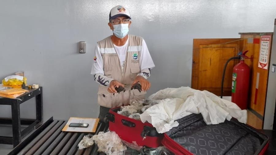 O tráfico de fauna silvestre é um crime com pena de um a três anos de prisão no Equador - Reprodução/Twitter/Ambiente_Ec