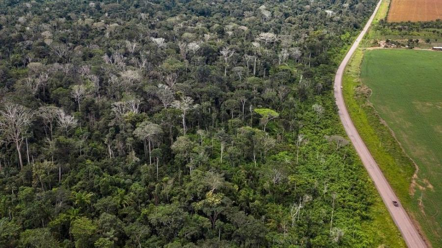 Queimada de floresta amazônica ao lado da BR 163 no Pará deixou grande número de árvores mortas (na imagem, sem folhas e esbranquiçadas) - Marizilda Cruppe/Rede Amazônia Sustentável
