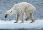 Maiores economias industriais estão levando mudança climática mais a sério - Kerstin Langenberger/Reprodução Facebook