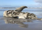 Marine Dynamics / Dyer Island Conservation Trust