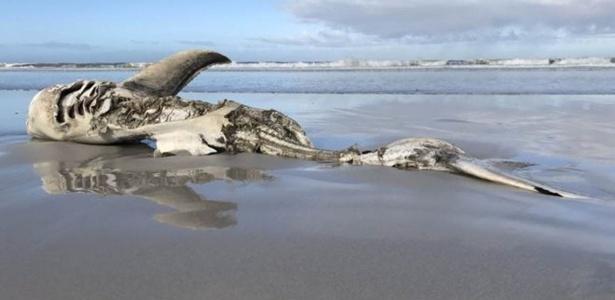Uma das carcaças encontradas media mais de 4 metros de comprimento