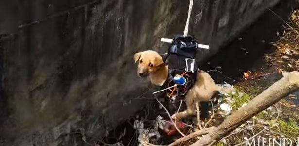 Engenheiro indiano Milind Raj resgata filhote de cão de córrego em Nova Deli