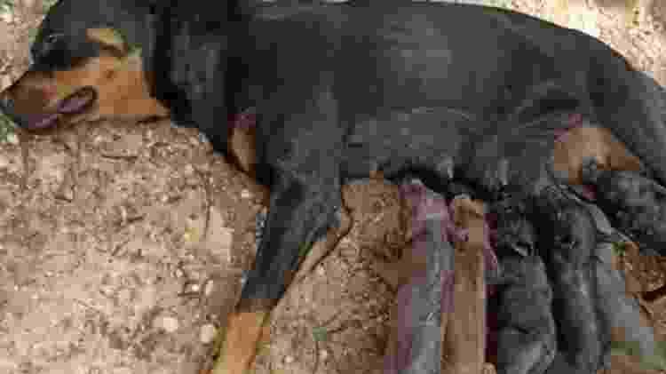 cadela - Arquivo Pessoal - Arquivo Pessoal
