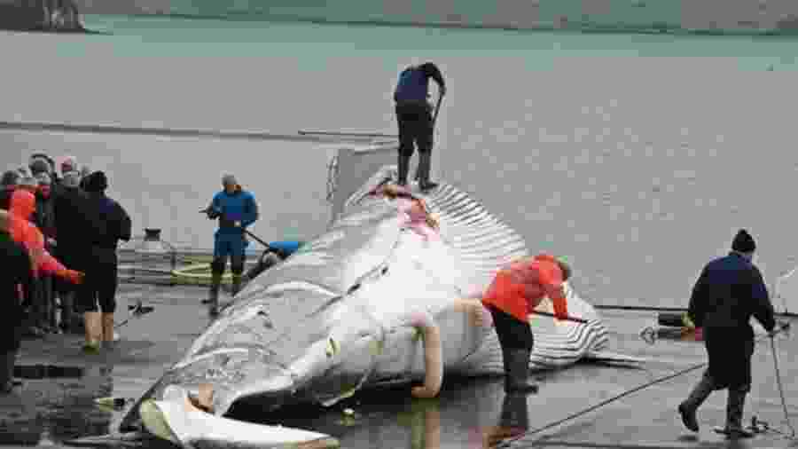Caça de baleias é criticada por ambientalistas, mas, diferentemente do desmatamento na floresta amazônica, está sujeita a regras rígidas e parâmetros legais - PA