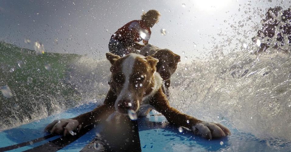 18.fev.2016 - O surfista e treinador de cães Chris de Aboitiz surfa acompanhado de seus cachorros na praia de Palm Beach, em Sydney