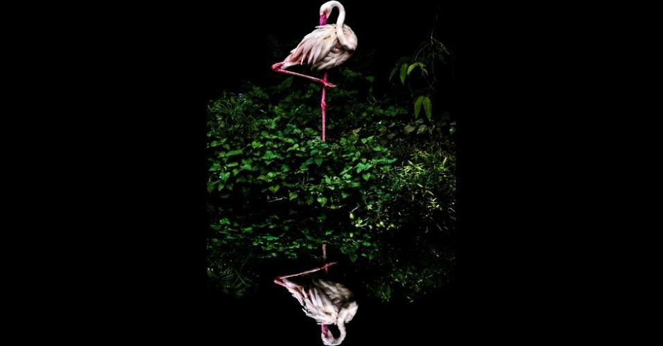 23.fev.2016 - A foto de Steiner Wang, Flamingo na Nuvem, está entre as finalistas na categoria Natureza Aberta e Vida Selvagem