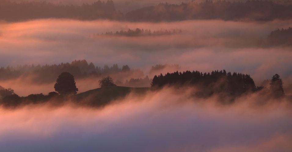 30.ago.2016 - Sol nasce em uma floresta coberta por uma camada de nuvens situada perto de Bernbeuren, na Alemanha