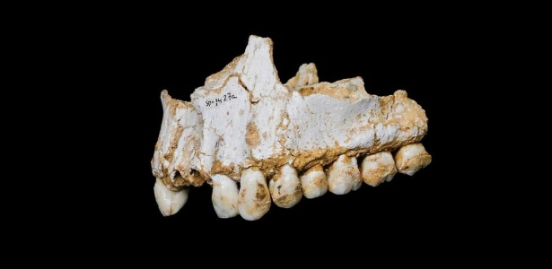 Estudo mostrou que neandertais comiam rinoceronte com cogumelos e tomavam aspirina ao analisar suas placas dentárias