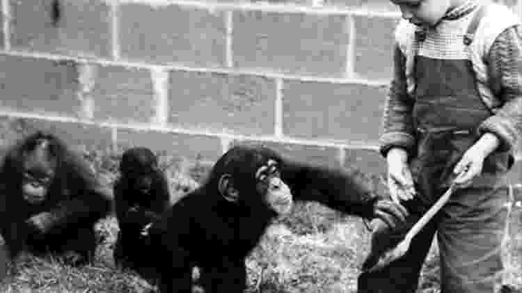 Humanos imitam de uma maneira que os chimpanzés não - psicólogos chamam isso de superimitação - Getty Images