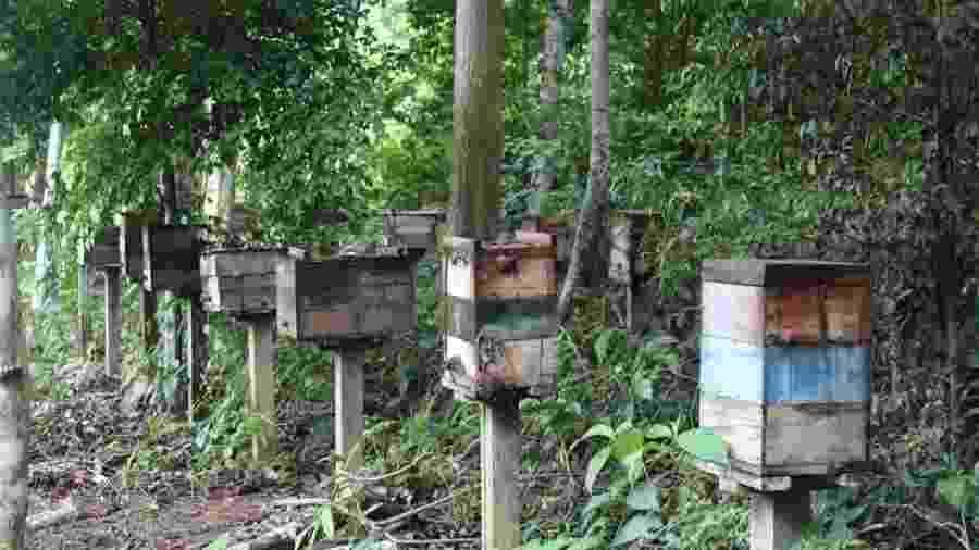 Produção de abelhas sem ferrão despencou na região de Belterra e se tornou economicamente insustentável - Gabriel Siqueira/BBC