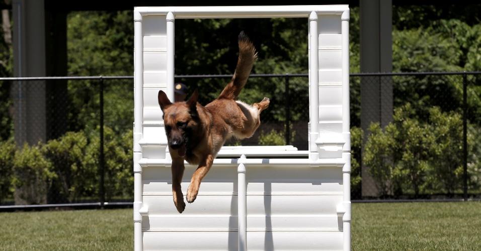 Após 11 de setembro, cresce demanda por cães policiais