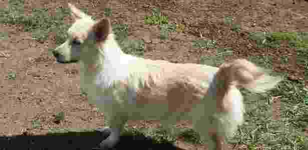 Cães_5 - BBC Brasil - BBC Brasil