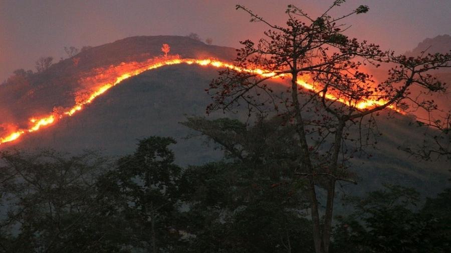 Este ano, quatro áreas ao redor do mundo registraram os maiores incêndios florestais já vistos desde o início da observação de dados de satélite, duas décadas atrás - Getty Images