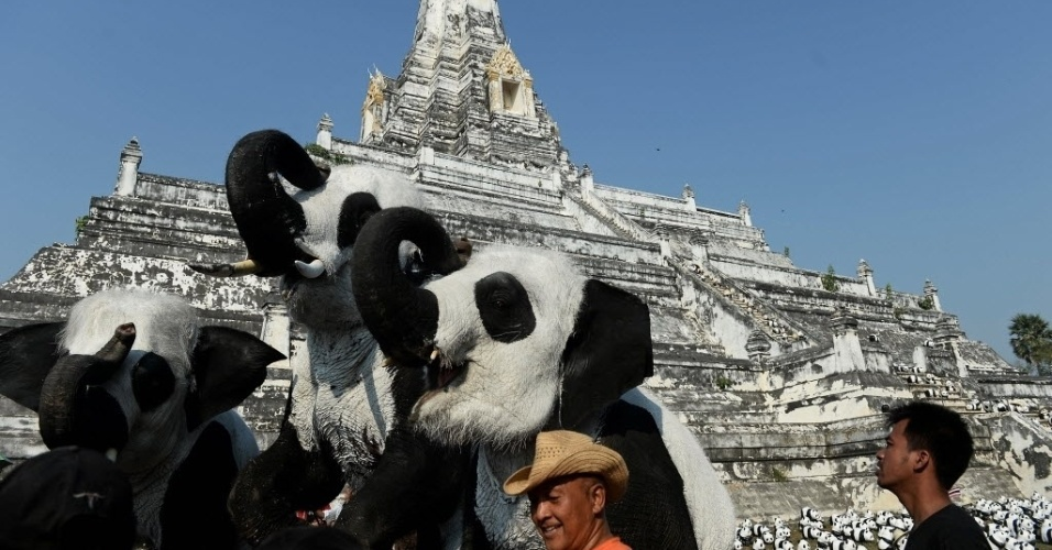 16.mar.2016 - Esculturas de elefantes com as cores dos pandas são colocadas em frente a um templo de Ayutthaya, na Tailândia. Uma ação promovida em parceria com a  ONG WWF (Fundo Mundial para a Natureza) vai espalhar mais de 1.600 pandas pelo mundo para conscientizar o público sobre as espécies ameaçadas de extinção