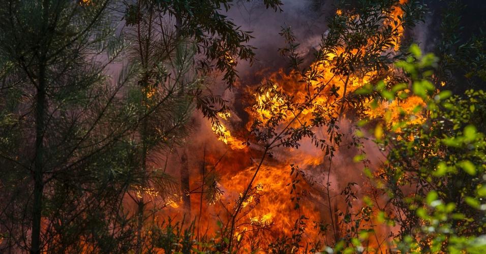 7.ago.2016 - Chamas se espalham em floresta próxima a Trofa, no norte de Portugal. Mais de 2.000 bombeiros trabalham para apagar o incêndio