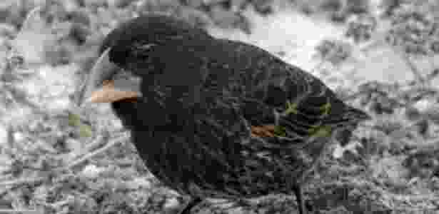 Pássaro 3 - B.R. Grant - B.R. Grant