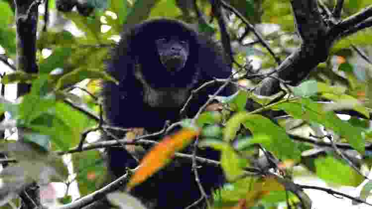 Milhares de espécies diferentes vivem na Amazônia - Getty Images