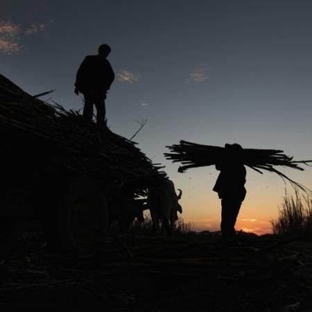 Os migrantes foram recrutados no Estado do Maranhão para trabalhar no plantio de cana-de-açúcar em fazendas de Ituverava, interior de São Paulo -