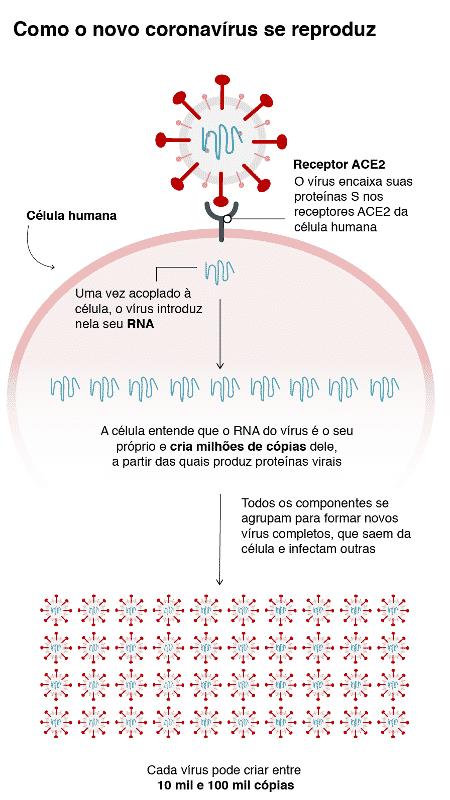 Gráfico mostra o que coronavírus faz no seu corpo - BBC - BBC