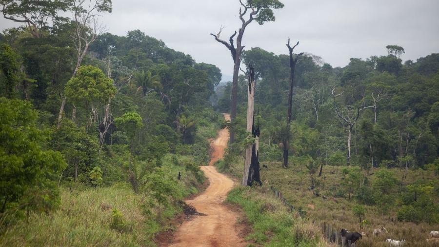 Estrada aberta dentro da Floresta Nacional do Jamanxim, área de reserva ambiental dominada por conflitos agrários, grilagem de terras, garimpos e extração de madeira - Joao Laet / The Guardian