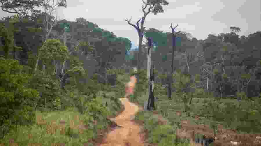 Estrada aberta dentro da Floresta Nacional do Jamanxim, área de reserva ambiental dominada por conflitos agrários, grilagem de terras, garimpos e extração de madeira ilegal  - Joao Laet / The Guardian