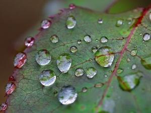 Gotas de orvalho - Getty Images - Getty Images