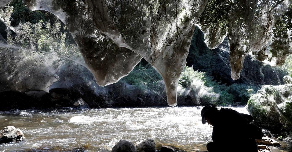 8.nov.2017 - Às margens de um riacho no Vale de Soreque, região próxima de Jerusalém, em Israel, uma floresta tem suas árvores envolvidas por teias de aranhas gigantes, da família Tetragnathidae, conhecidas por suas mandíbulas alongadas