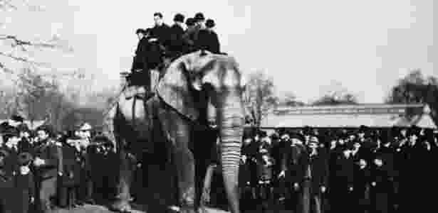 Jumbo passeia com visitantes do zoológico de Londres; peso provocou lesões nos quadris e joelhos do elefante - Wiki Commons