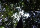Aquecimento global dificulta regeneração da Amazônia, aponta estudo (Foto: Adriane Esquivel Muelbert/University of Leeds)