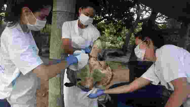 Tartaruga coberta de óleo é tratada no Centro de Reabilitação de Mamíferos Marinhos em Caucaia, Ceará; pelo menos dez tartarugas já morreram em meio a vazamentos no Nordeste - AFP PHOTO/ ACERVO AQUASIS/MIKA HOLANDA