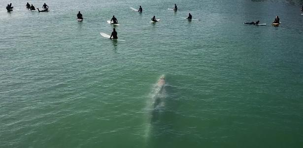 Drone flagrou | Baleia nada entre surfistas em vídeo impressionante