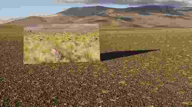 Os pumas mudaram o cenário dos altiplanos na Argentina - Passion Pictures
