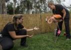 Parque na Grande SP abriga e cuida de animais sem-teto - Rahel Patrasso/Xinhua