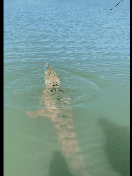 O pescador Trent de With capturou um crocodilo e travou luta para desprender o réptil - Reprodução/Rod & Rifle TackleWorld Katherine