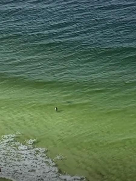 Imagem do tubarão chegando perto do nadador em costa americana - Reprodução/TikTok/@katievanbogart