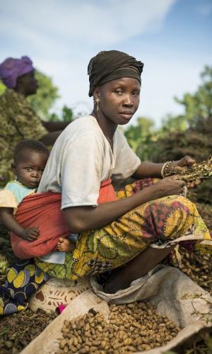 Trabalho sem ganho. Mulher trabalha na colheita de amendoins numa fazenda no Mali. Apesar da maioria da produção de alimentos estar nas mãos das mulheres, elas geralmente não veem os lucros do seu trabalho