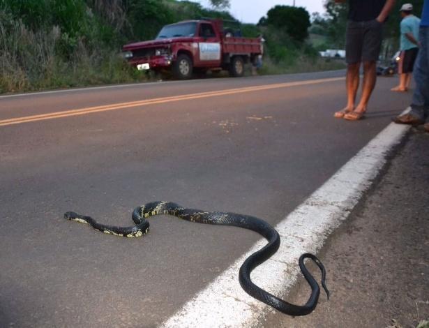 Mulher conduzia moto quando cruzou com cobra, perdeu controle e sofreu acidente - Josias Marques/Portal In Foco RS