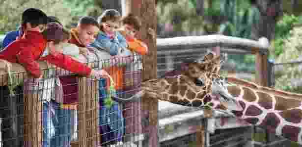 Clonagem de animais ganha cada vez mais espaço - Getty Images - Getty Images