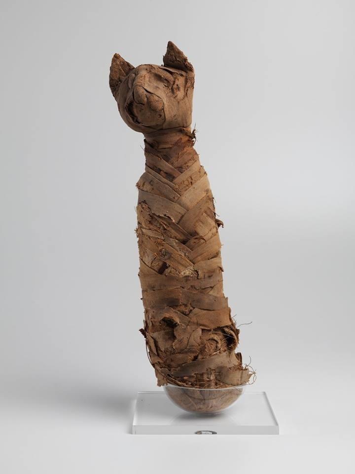 Gato mumificado do período Romano, século I a.C., parte da exposição sobre o Egito, do Museu Nacional.